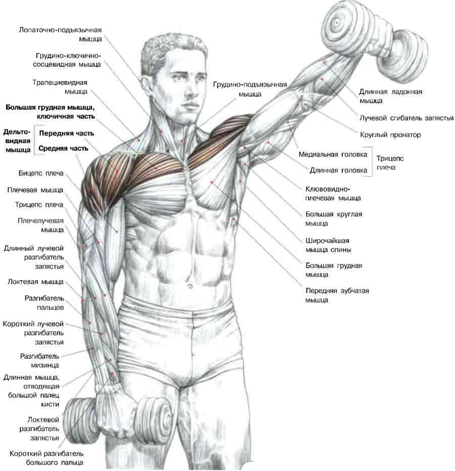 Упражнения для плеч с одной гантелей в домашних условиях 432