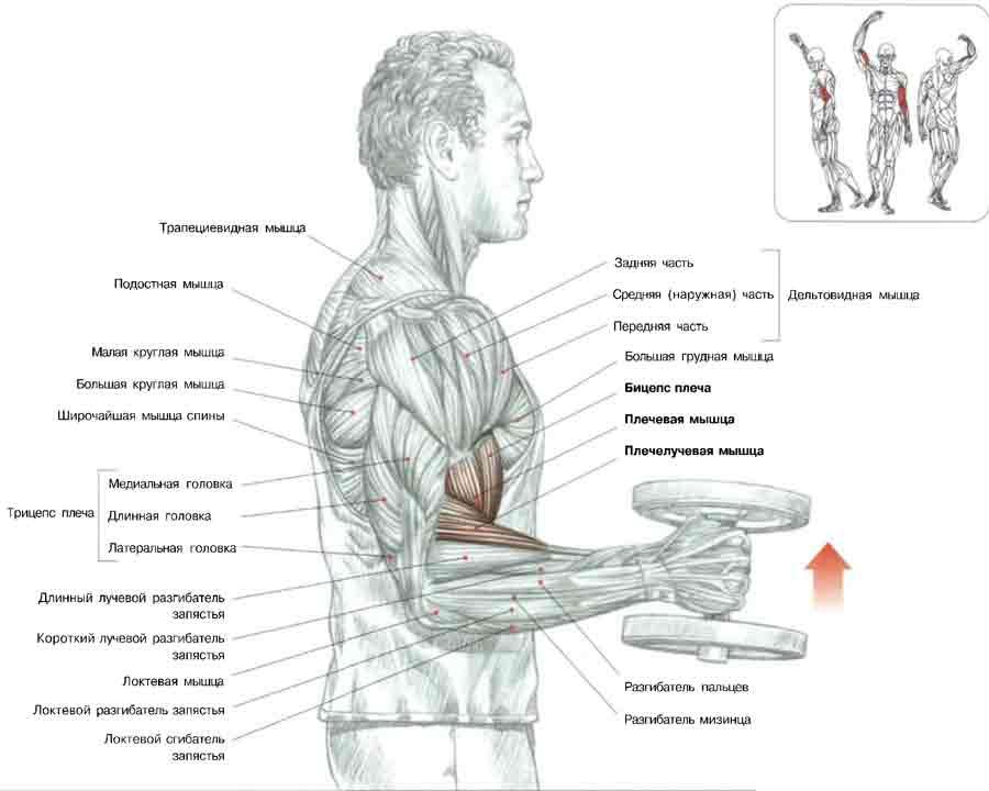 упражнение для рук для похудения