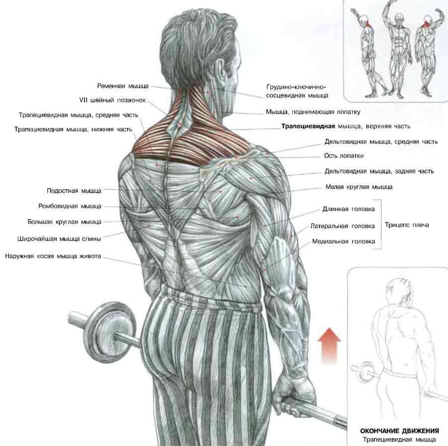 Упражнения для верхних мышц плечи