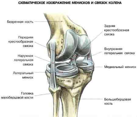 Нестабильность связок коленного сустава застудить сустав нижний челюсти